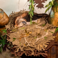 Detail, Philippine Eagle Nest
