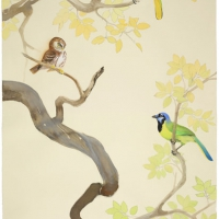 green jays and ferruginous pygmy-owl