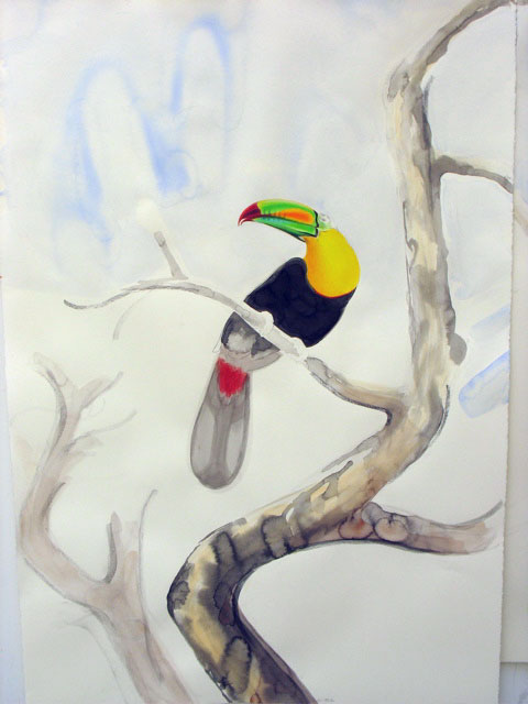 rainbow (keel-billed) toucan