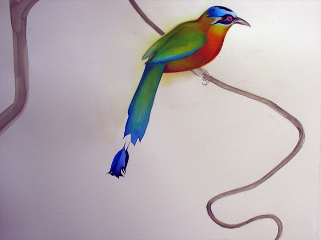 detail: blue-crowned motmot
