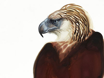 Philippine Eagle by David Tomb