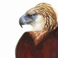 The Greater Philippine Eagle, painted by David Tomb