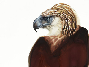 Painting of Philippine Eagle by David Tomb