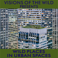 thumbnail-wild-places-urban-spaces
